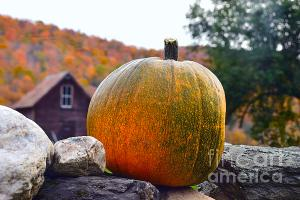 Pumpkin on a rock wall in a charming village in the Green Mountains of Vermont in Autumn.